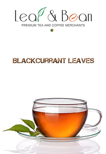 Blackcurrant-Leaves